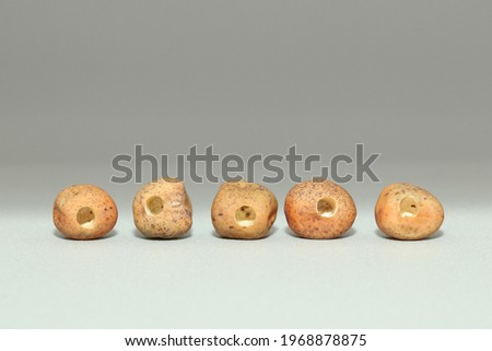 Dried yellow pea seeds with holes gnawed by pea weevil (Bruchus pisorum). Spoiled perforated sweet pea seeds close-up on gray background lying in a row. Stock photo ©