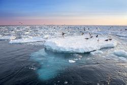 Drift Ice in shiretoko, Hokkaido, Japan