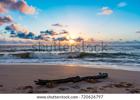 drift wood and seaweed on tropical beach in the morning #720626797