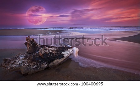 Drift wood at sunset on sandy beach  and full moon rise
