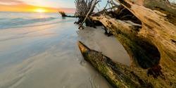 Drift Wood Sunset