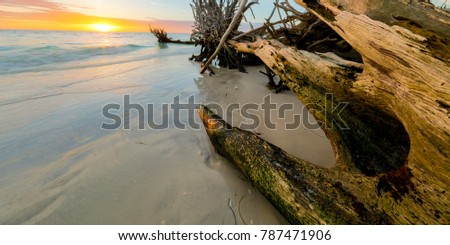 Drift Wood Sunset #787471906