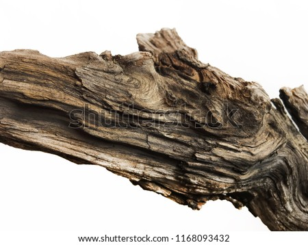 Driftwood/aged wood over white background. Isolated piece of driftwood top view. Driftwood stick closeup, wood texture for aquarium.
