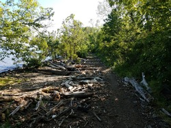 driftwood and logs on trail near Potomac river