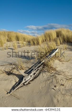 Driftwood and sand dunes with vivid blue sky. Peron Dunes, Tasmania, Australia. - stock photo