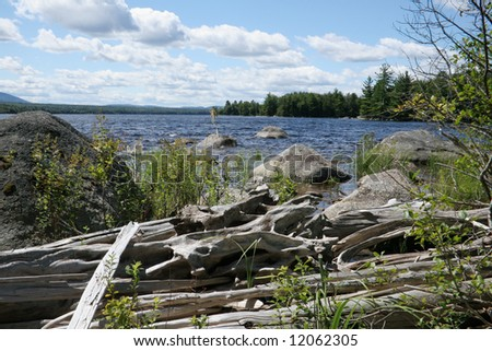 Driftwood, driftwood at the edge of a beautiful Maine lake