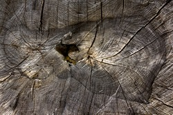 Driftwood image background. trunk of a tree, detail of a cross section. full of shapes, textures and typical details of the wood. Organic and natural texture background and free space for designers.