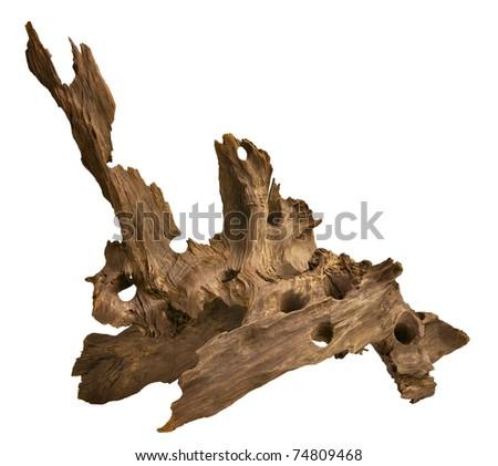Driftwood isolated in white background. Aquarium wood.