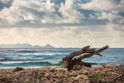 Driftwood isolated on deserted beach on shore line, cloudscape horizon