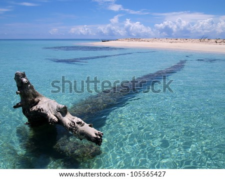Driftwood large tree trunk in clear water near a sandy beach of a tropical island
