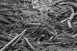 Driftwood on a Lava Beach.  Hawaiian photograph of fresh lave and old tree branches in black and white.
