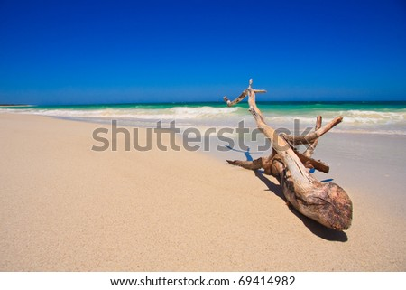Driftwood on a tropical beach