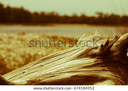 driftwood on oyster beach of...