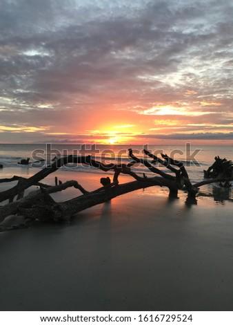 Driftwood on the beach at sunrise. Beautiful sunrise