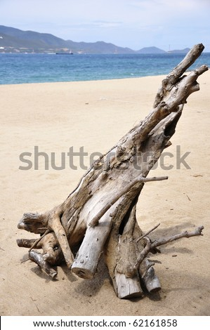 Driftwood on the Nha-Trang Beach in Vietnam