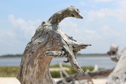 Driftwood on the sand with blue clouds in sky at Steinhatchee Florida