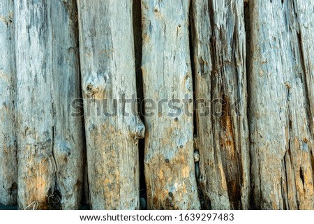 Driftwood pilings in the sand