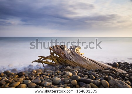 Driftwood Stuck in the Rocks
