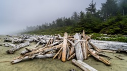 Driftwood washed on shore on the Fog covered sandy Beach of Cox Bay in Pacific Rim National Park on Vancouver Island, British Columbia, Canada