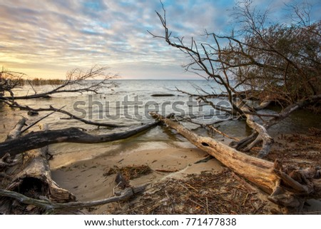 Driftwoods. Grey tree branches lying over the water, dry dead wood in a lake #771477838