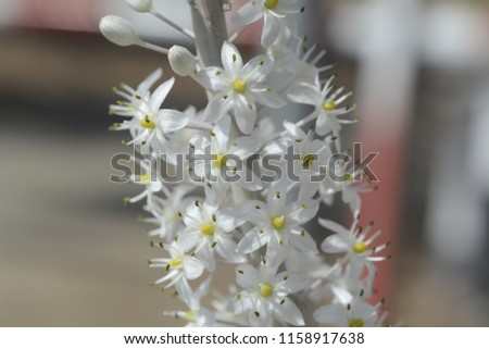 Free photos wild white rock flowers on the background of the sea drimia species are usually deciduous more rarely evergreen growing from bulbs the bulbs mightylinksfo