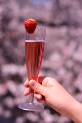 Drink of strawberry sparkling wine in the glass on background of cherry blossoms, sakura in Tokyo, Japan. Spring sakura viewing