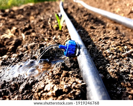 dripslowly to the roots of plants, either from above the soil surface or buried below the surface. The goal is to place water directly into the root zone and minimize evaporation. Selective focus.  Foto stock ©