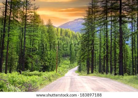 Drive through pine woods in Montana