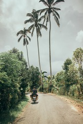 Driving in the countryside with palmtrees in Bali