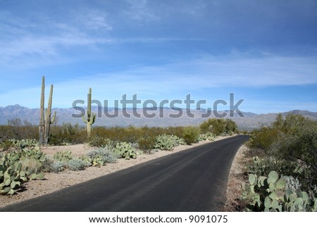 Driving through the desert, Saguaro National Park, Tucson, Arizona