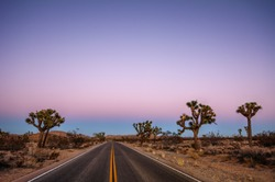 Driving through the desert, sparse trees along the road, during sunset