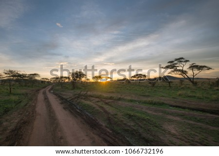 driving to the sun down on a dirt track in the savanna