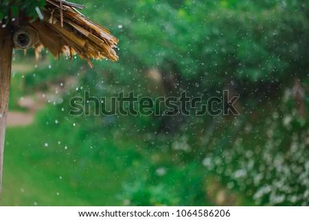 Drizzle rain of fresh morning