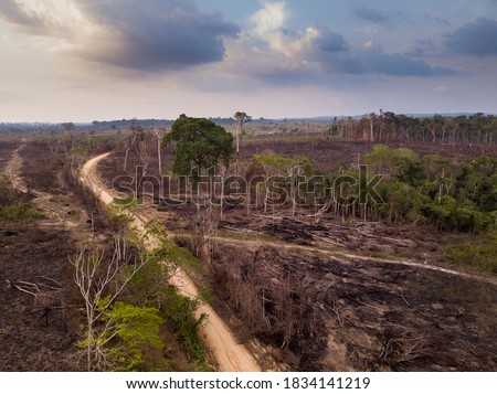 Drone aerial view of deforestation in the amazon rainforest. Trees cut and burned on an illegal dirt road to open land for agriculture and livestock in the Jamanxim National Forest, Para, Brazil.