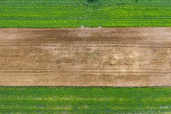 Drone, aerial view of fields with green plants and brown cereal