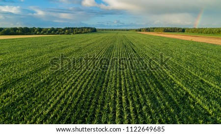 Drone flight and aerial view over a corn field #1122649685