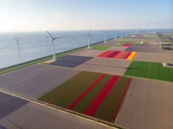 Drone flying over windmill farm with colorful tulip fields in the Noordoostpolder netherlands, Green energy windmill turbine at sea and land