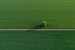 Drone photo of the bright green wheat field separated by the road. There is a tree by the road. aerial view. beautiful minimalist wallpaper. Európa Hungary