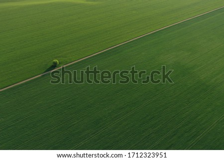 Drone photo of the bright green wheat field separated by the road. There is a tree by the road. aerial view. beautiful minimalist wallpaper. Európa Hungary Stock fotó ©