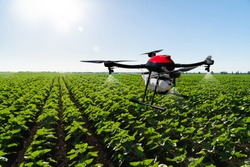 Drone sprayer flies over the agricultural field. Smart farming and precision agriculture