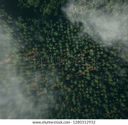 Drone view above a forest #1280312932