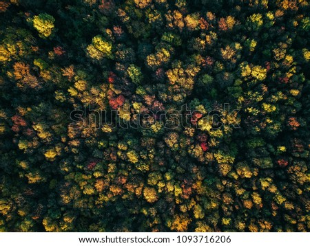 Drone view of stunning colorful autumn fall forest at sunset #1093716206