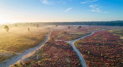 Drone view of the National Park 'Loonse  en Drunense Duinen', famous for its sand dunes and heather fields, province of 'Noord-Brabant', the Netherlands