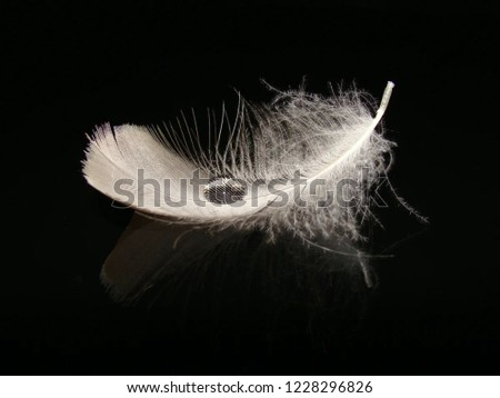 Drop of water on a feather on a black background #1228296826