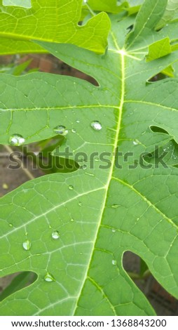 drop of water on the castor leaf #1368843200