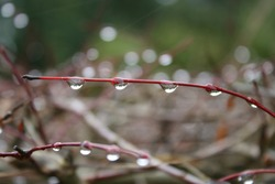 Drop on a branch