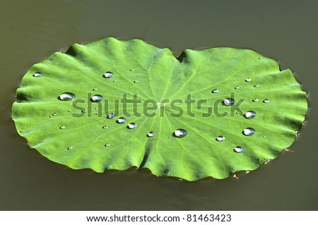 Drop on lotus leaf