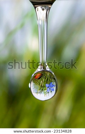 Drop with reflection of mountain flower
