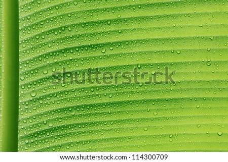 droplet on green leaf