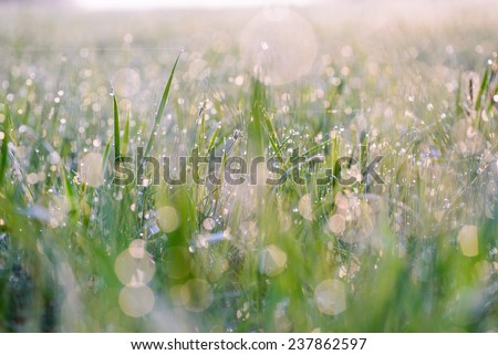 Droplets of dew on the grass glowing in the morning sun, and create a charming picture